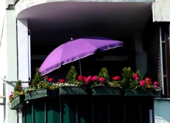 Pretty flowers are a common sight in Zagreb