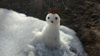 Snow Owl :D